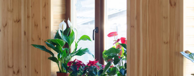 How to help houseplants survive winter from Bryan's Fuel